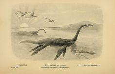 Long-necked Sea-Lizard by peacay