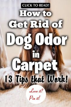 Ideas cleaning carpet smell pet odors how to remove Urine Smells, Dog Smells, House Smells, Dog Pee Smell, Carpet Smell, Pet Odor Eliminator, Pet Odors, Urine Odor, Dog Urine Remover