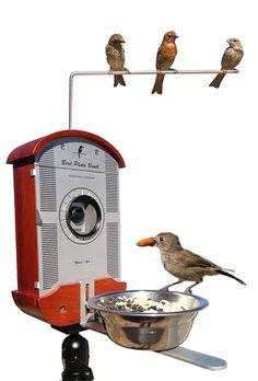 lisa m ca bird photo booth close-up photography