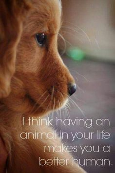 Especially if that animal is a Golden Retriever