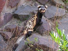 zooinstitutes.com animalpic.asp?name=6733