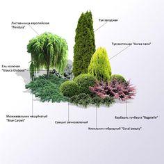 Flowers Garden Design Layout Perennials Best Ideas - New ideas Garden Plants Design, Evergreen Landscape, Conifers Garden, Garden Landscape Design, Backyard Landscaping, Urban Garden, Garden Planning, Flower Garden Design, Garden Design