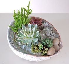 """ABALONE SHELL PLANTING 8""""w x 6.5""""d– $48.                              …"""