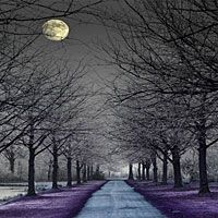 Moonlight Path (type)