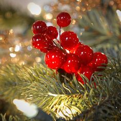 Kurt Adler Red Berry Grape Cluster > Challenge the offers awaits you : Christmas Tree Toppers Tree Top Bow, Beautiful Patterns, Beautiful Flowers, Christmas Tree Toppers, Christmas Decorations, Tree Tops, Wire Baskets, Weaving Techniques, Silver Glitter