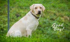 best dog training tips puppy training 101 2985444894 Teach Dog To Come, Teach Dog Tricks, Dog Minding, Puppy House, Easiest Dogs To Train, Dog Training Techniques, Best Dog Training, Dog Hacks, Best Dogs