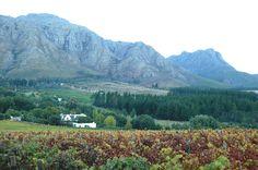 Vriesenhof Stellenbosch Eline: been there! Fantastic wine!!! Not easy to get in The Netherlands...