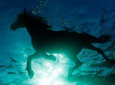 Beautiful photos of a horse swimming. Amazing work. Check out his FB page, too.