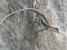 在念彼發現的小蜥蜴
