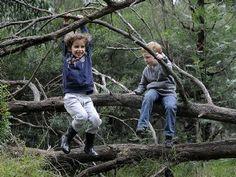 let the children play: Australia's first forest preschool