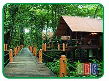 Evergreen Lodge-Tortuguero