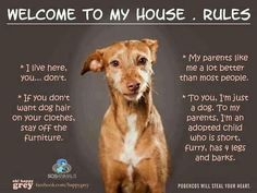 house Rules: I live here... you don't. If you don't want dog hair on your clothes, stay off the furniture. My parents like me a lot better than most people. To you , I'm just a dog. To my parents, I'm an adopted child who is short, furry, has 4 legs and barks