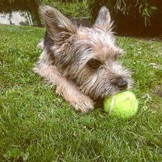 El perro cuando te percibe triste o siente que te has hecho daño rápidamente acude a lamerte la herida; le da igual cómo te hayas hecho esa herida o quién te la ha hecho o si te la merecías o si es más grande o más pequeña. Él simplemente sabe que una herida se cura dando cariño y te lo da sin dudarlo dos veces.  Las personas deberíamos hacer lo mismo. Dar amor es la única manera de curar heridas.   #bestfriend #dogofinstagram #perro #puppy #love #teamo #coruña #Galicia #amoresperros #vida…