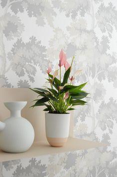 beautiful hanging plants ideas for home for Best Indoor Plants, Cool Plants, Plant Design, Garden Design, Living Room Ideas 2020, Plant Wallpaper, Australian Garden, House Plants Decor, Hanging Plants