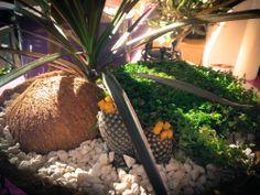 Vertical garden. Cactus, coconut shell. Little_Garden