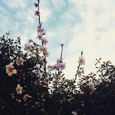#primavera #fiori