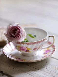 pink mauve rose in tea cup