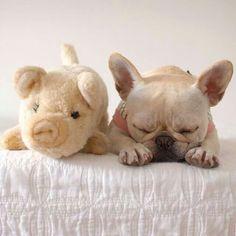 Little piggy <3