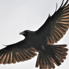 """Would want this in black and white with banner that says """"It Can't Rain All The Time"""" but the crow would have to be straightened out"""