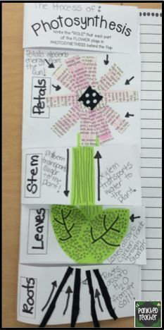 Teaching about Photosynthesis and a link to a GREAT freebie!!!