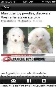 man buys dog ferret on steroids