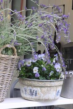 Potted purple pansies and lavender