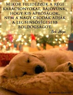 Golden retriever puppy sleeping by the Christmas tree while waiting on Santa. Cute Puppies, Cute Dogs, Dogs And Puppies, Doggies, Baby Dogs, Corgi Puppies, Chien Golden Retriver, I Love Dogs, Puppy Love