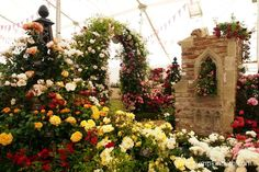 Peter Beales Roses beautiful exhibit inside The Festival of Roses Marquee, was chosen by the RHS judges as the Best Rose Exhibit, at the RHS Hampton Court Palace Flower Show Garden Arbours, Rhs Hampton Court, Judges, Flower Show, Beautiful Roses, Arches, Exhibit, The Hamptons, Palace