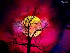 Alive With Color, Beautiful Sunset < Nature < Life < Desktop Wallpaper Beautiful Moon, Beautiful World, Beautiful Images, Neon Licht, Scenery Background, Shoot The Moon, Belle Photo, Night Skies, Pretty Pictures