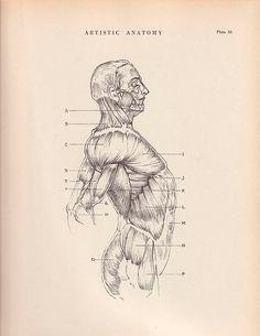 Vintage Print Human Anatomy Illustration 1941 Wall Art by AgedPage