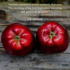 September was crisp and golden as an apple