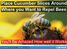 Bees, Wasps & Hornets - Use Cucumber Slices as a Natural Bee Repelent