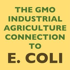 """Because the U.S. government subsidizes the GMO corn ethanol industry, wet distiller grains left over from the GMO corn ethanol making process have become a cheap source of feed for U.S. cattle. Now USDA researchers have found that """"E. coli pathogens live longer in feces from cattle fed with more wet distillers grain."""" Tom Philpott at Mother Jones explains: """"In essence, the entire corn ethanol edifice hinges on a product the USDA openly acknowledges boosts the pathogen load in beef."""""""