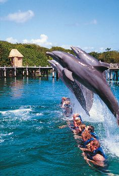 Swimming with dolphins at Xcaret, Cancun Mexico.Ailleurs communication…