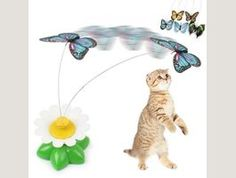 Electric Rotating Butterfly Cat Exerciser Cat Teaser What a great way to keep your cat healthy and fit for life? This is a fantastic teaser exercise cat toy to make your kitty to play and exercise. This Electric Rotating Butterfly… Continue Reading → Funny Cats And Dogs, Cats And Kittens, Cats For Sale, Happy Animals, Funny Cat Pictures, Stuffed Toys Patterns, Dog Supplies, Cat Toys, Cool Cats