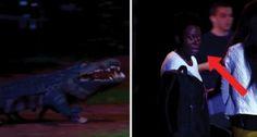 Terrorisés, ils fuient un crocodile à leurs trousses, mais la réalité est ... une surprise!