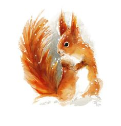 Red Squirrel watercolor painting Art Print. от MiraGuerquin