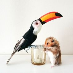 I invite you to share your own caption for Sir Teddy and Percival the Toucan  #sirteddythehamster