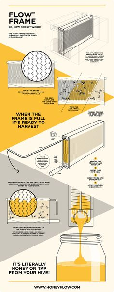 A crowdfunding campaign for The Flow Hive has recently raised making it one of the most successful campaigns of all time. The Flow Hive is a beehive that allows you to get honey Raising Bees, Bee Farm, Save The Bees, How To Keep Bees, Hobby Farms, Busy Bee, Bees Knees, Agra, Homesteads