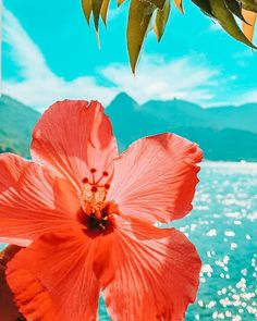 Beach Phone Wallpaper, Summer Wallpaper, Cute Wallpaper Backgrounds, Flower Wallpaper, Hawaiian Flowers, Hibiscus Flowers, Flowers Nature, Beautiful Flowers, Cool Wallpapers For Phones