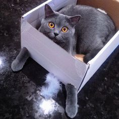 Um okay!!!  Photo Credit: @kurella_elena #catsinboxes #boxedcats #pussycats #meow #kittens #cat #cats #ilovecats #crazycatlady #paws #thefunnycatlady #gato #gatto #chat #cica #neko #gorbe #kot #koshka #kuching #macë by thefunnycatlady