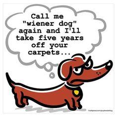 dachshund quote