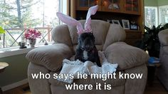 Will the Easter Bunny get his magic back? Can the Easter Bunnies In-Training help? Will Easter be saved? Find out! #easter #easterbunny #seniordog #happyeaster #pug #frenchbulldog