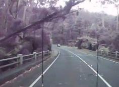 Grosse chute d'arbres sur une route, vidéo qui a beaucoup circulé sur le web et fait le buzz, car très impressionnante, sur une route de l'État de Victoria, en Australie, un automobiliste a filmé la chute de plusieurs arbres à quelques centimètres de lui en pleine tempête.