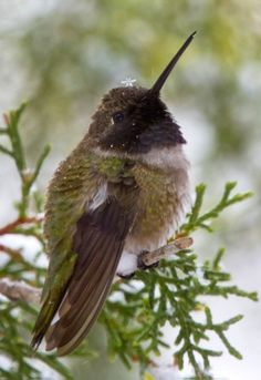 Hummingbird with a snowflake crown