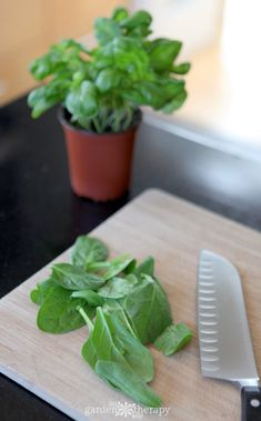If you have a lot of basil to contend with. Here are some fresh basil recipes that go beyond the norm and help the fresh basil flavor last all year. Fresh Basil Recipes, Herb Recipes, Canning Recipes, Great Recipes, Whole Food Recipes, Yummy Recipes, Recipies, Preserving Basil, Fresh Herbs