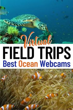 Looking for virtual field trips and ways to keep young minds busy? Take a virtual aquarium tour with ocean live feeds! These are the best ocean virtual field trips for kids, homeschooling, and teacher resources. See jellyfish & sea otters at Monterey Bay Aquarium, penguins at Aquarium of the Pacific, manatees & corals in Florida, a kelp forest in California, Beluga whales in Manitoba, whale sharks in the Georgia Aquarium & more! #onlinelearning #homeschool #homeschoolactivities Travel Fund, Travel Tours, Packing Tips For Travel, Travel Advice, Travel Guides, Travel Destinations, Science Activities For Kids, Kindergarten Science, Preschool Activities