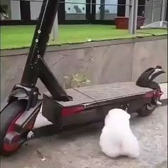Cute Dogs Videos Funny Hilarious Puppys Cute Mini Dog Australian Shepherd Small Dog For Kids puppies - AR Pet Supplies Animal Jokes, Funny Animal Memes, Funny Dogs, Funny Memes, Cute Little Animals, Cute Funny Animals, Cute Cats, Cute Baby Dogs, Cute Dogs And Puppies