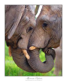 Elephant Kiss Photography at ArtistRising.com