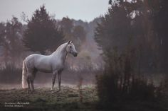 "equine-images: "" Peaceful   www.fotografie-maiwald.com """